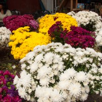 Price of flowers per pile between Rp. 5000 to Rp. 10,000