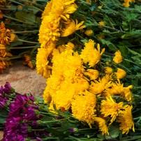 pile of fresh chrysanthemums