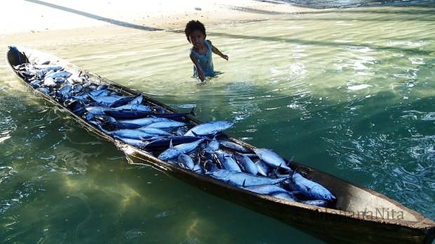 Juni, dimusim cakalang. Nelayan dapat memperoleh 700 kg Cakalang dalam  satu hari