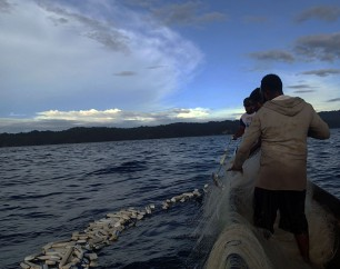 Menarik jaring diantara gerombolan Ikan Cakalang yang terkepung