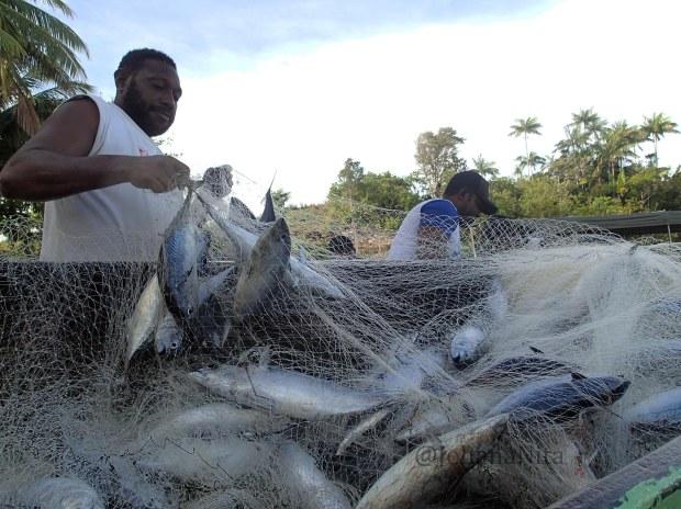 Nelayan Cakalang Kaimana, Papua Barat