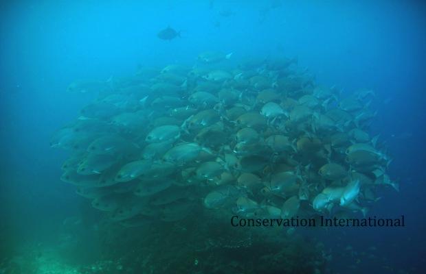 Scholling fish di Teluk Triton, Kaimana. CI_Ronald Mambrasar copy