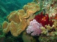 Teluk Triton, Kaimana 1. CI_Edy Setyawan copy